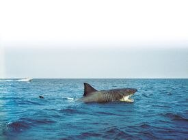 """The movie """"Jaws,"""" featuring mechanical sharks like this one on the Martha's Vineyard set, still captivates beachgoers today."""