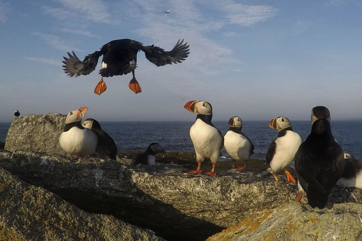 Puffin Browser Old Version