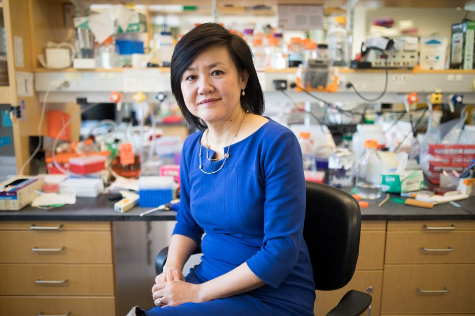 Li-Huei Tsai, the director of MIT's Picower Institute for Learning and Memory and the senior author on the study.