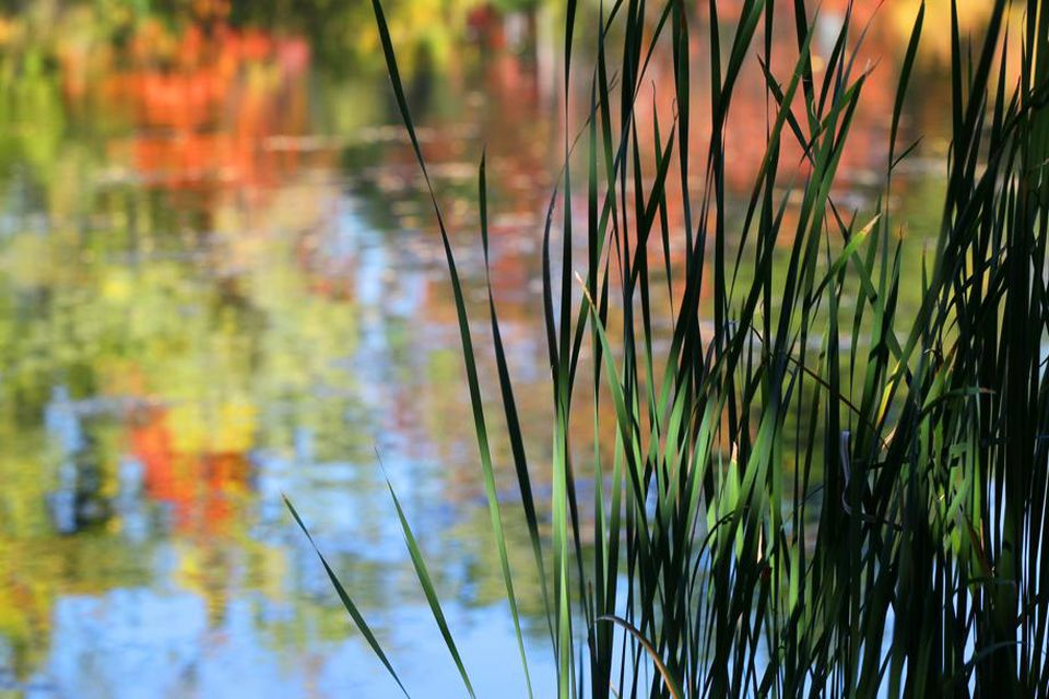 Fall colors reflect in Salisbury Pond at Institute Park across from Worcester Polytechnic Institute.