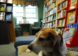 Bonnie the beagle is on hand for pet lovers at Island Books in Middletown, a store stocking beach and every other kind of reads.