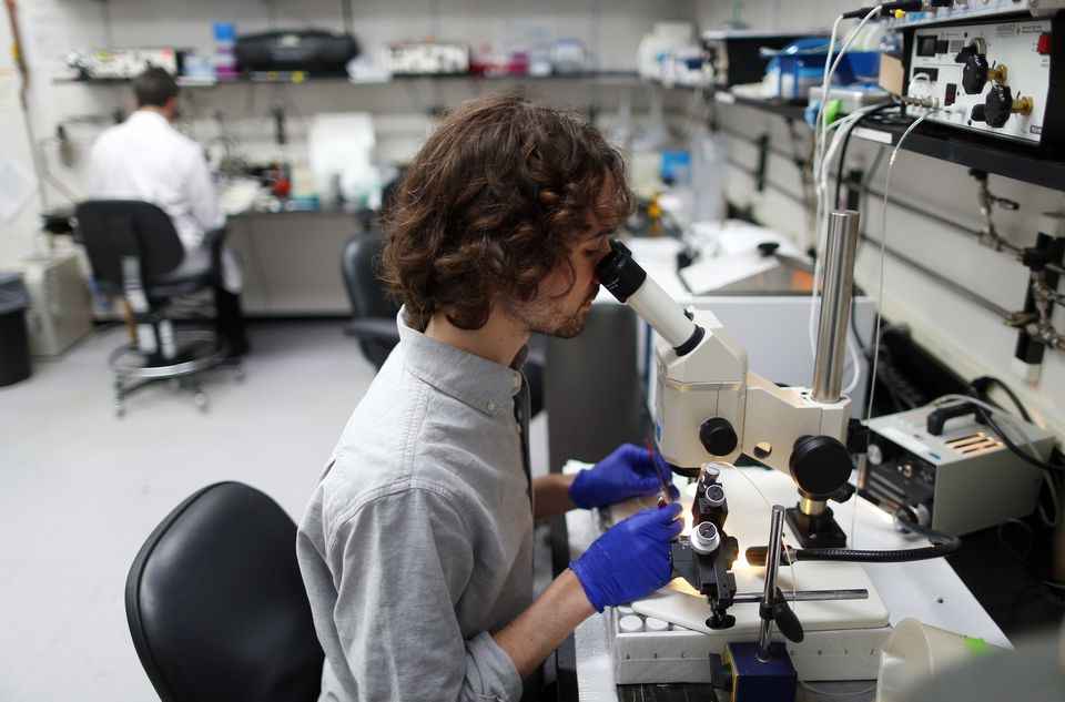 Gary McDowell, a postdoctoral researcher working at the Tufts University lab in Medford, hopes to set up his own lab in a few years.