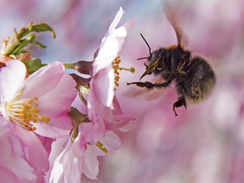 Bees, which pollinate about one-third of crops in the United States and account for some $15 billion in revenue for the agricultural industry, have suffered in recent years.