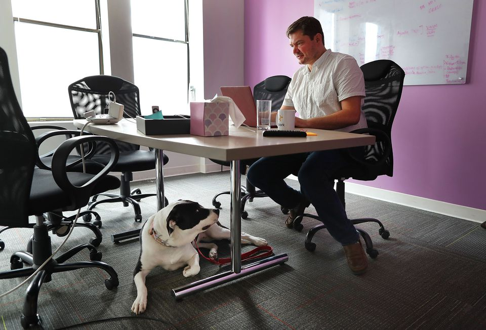 Embark cofounder Ryan Boyko worked at a desk in a conference room with his dog, Harley.