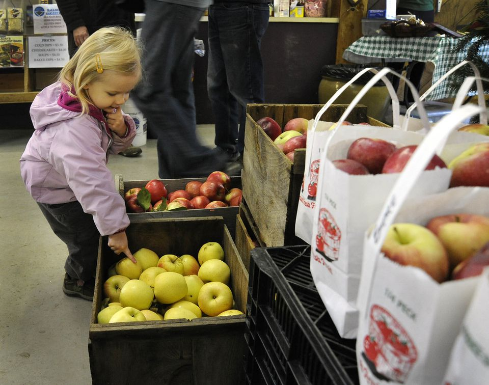 Scout Neild of Littleton checks out the apples on display from Hill Orchard at the Westford Farmers Market, at Eric's Garden Center.