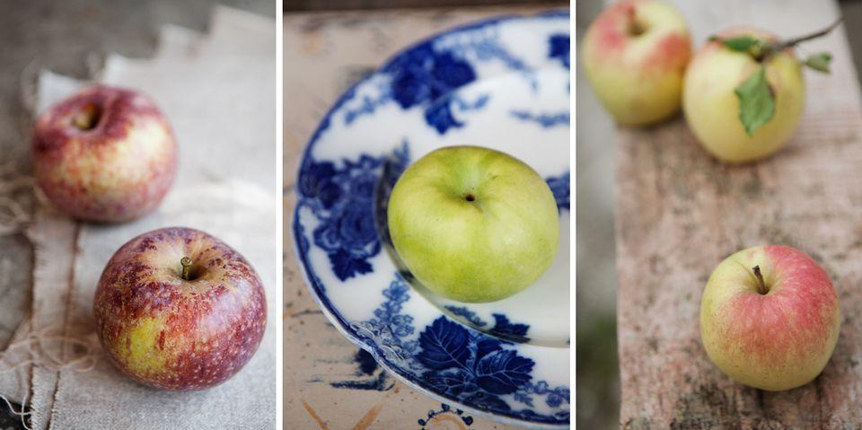 Varieties of apples, from left: Blue Pearmain, Tolman Sweet, and Porter.
