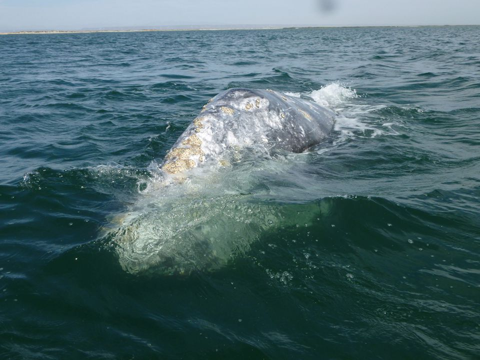 """""""I've had some whales let every human on the boat touch them,"""" says travel operator Emily Evans."""