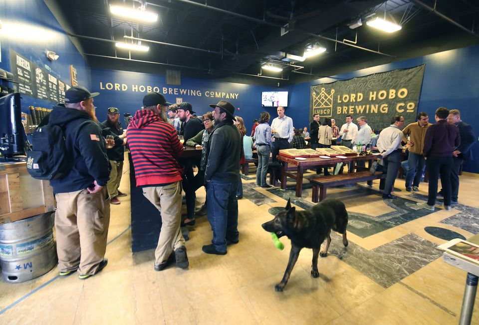 The tap room of Lord Hobo in Woburn where dogs are welcome.