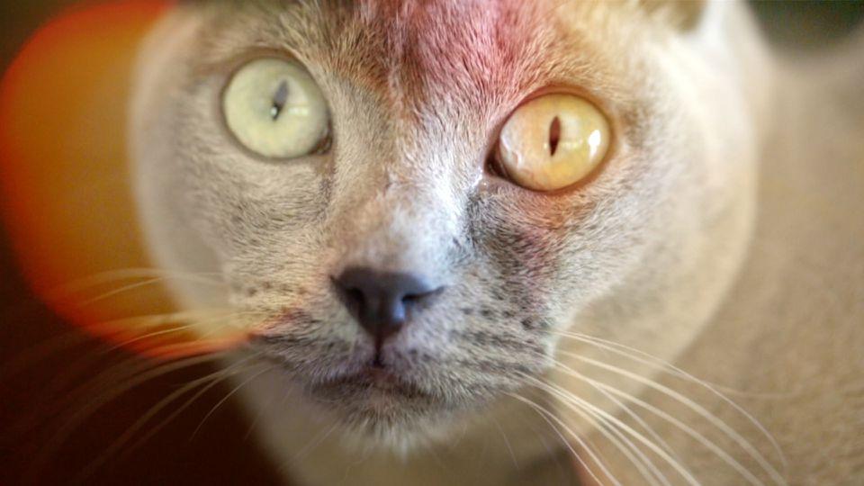 "A scene from ""Catnip: Egress to Oblivion?"""