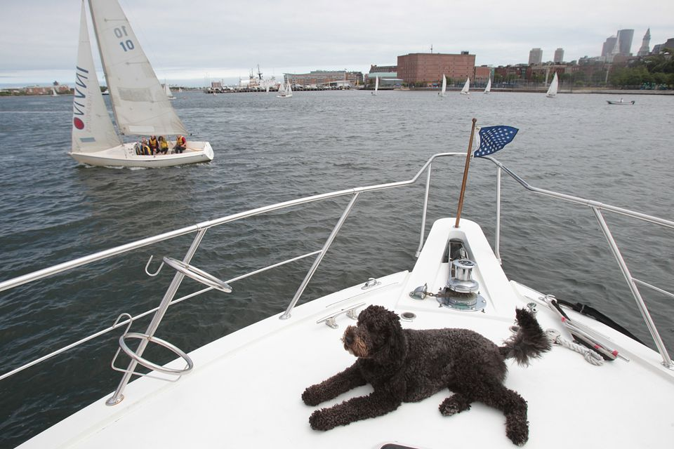 Goldendoodle Splash relaxes on the bow.