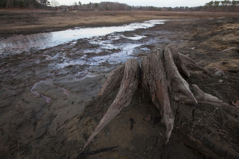 A tree stump that used to be underwater is exposed on a mud flat near the banks of the Foss Reservoir in Framingham.