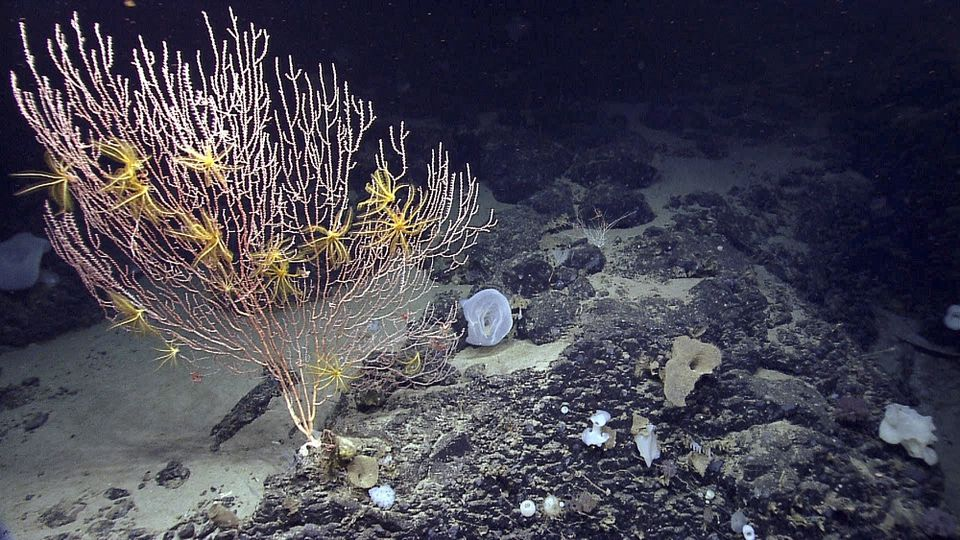 A federal judge tossed a lawsuit Friday from a group of fishing associations that challenged the creation of an underwater monument in the Atlantic Ocean. The monument is a 5,000-square-mile area that contains fragile deep sea corals and vulnerable species of marine life, such as right whales.