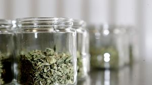 Why most Mass  marijuana sales are on the black market, two