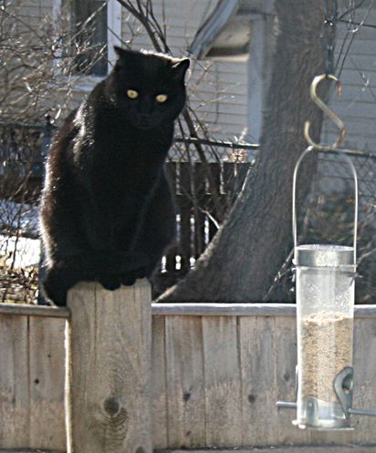Concord woman seeks to control trespassing cats - The Boston