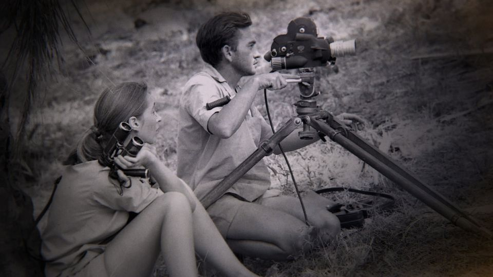 Jane Goodall (pictured with Hugo van Lawick in Gombe, Tanzania) is the subject of Brett Morgen's documentary.
