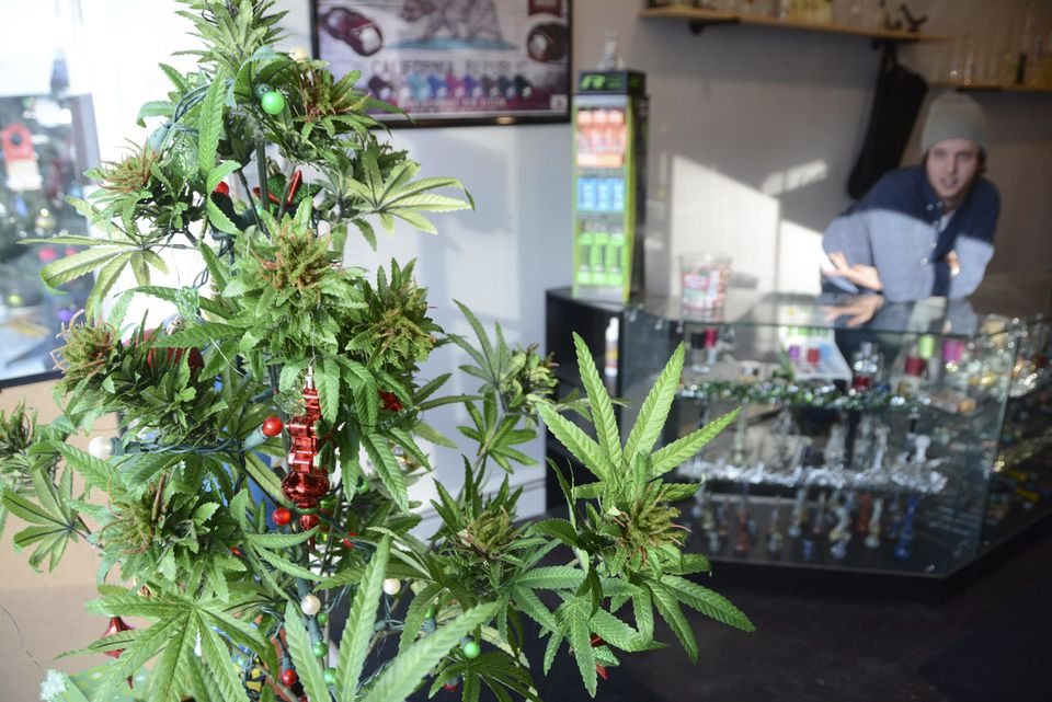 A faux marijuana Christmas tree sat in the window of Shire Glass, a fine tobacco shop on Main Street in Great Barrington.