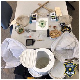 Officials collected undersized eels and small mesh nets, along with a hand gun, ammunition and drugs during a search of a car on Saturday.