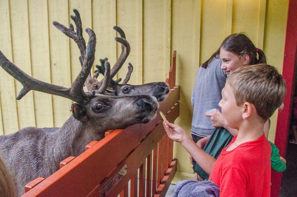 Feeding the reindeer at Santa's Village.