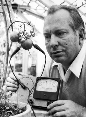 """L. Ron Hubbard testing a tomato in 1968. He claimed that """"tomatoes scream when sliced."""""""