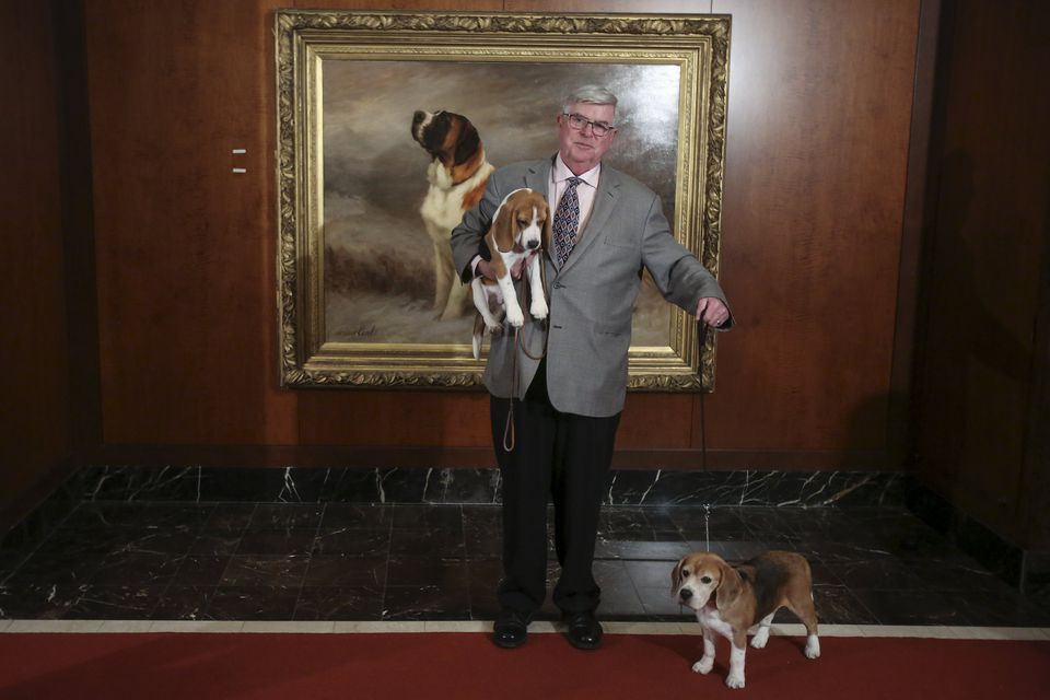 A man posed with beagles following a press event for the American Kennel Club.