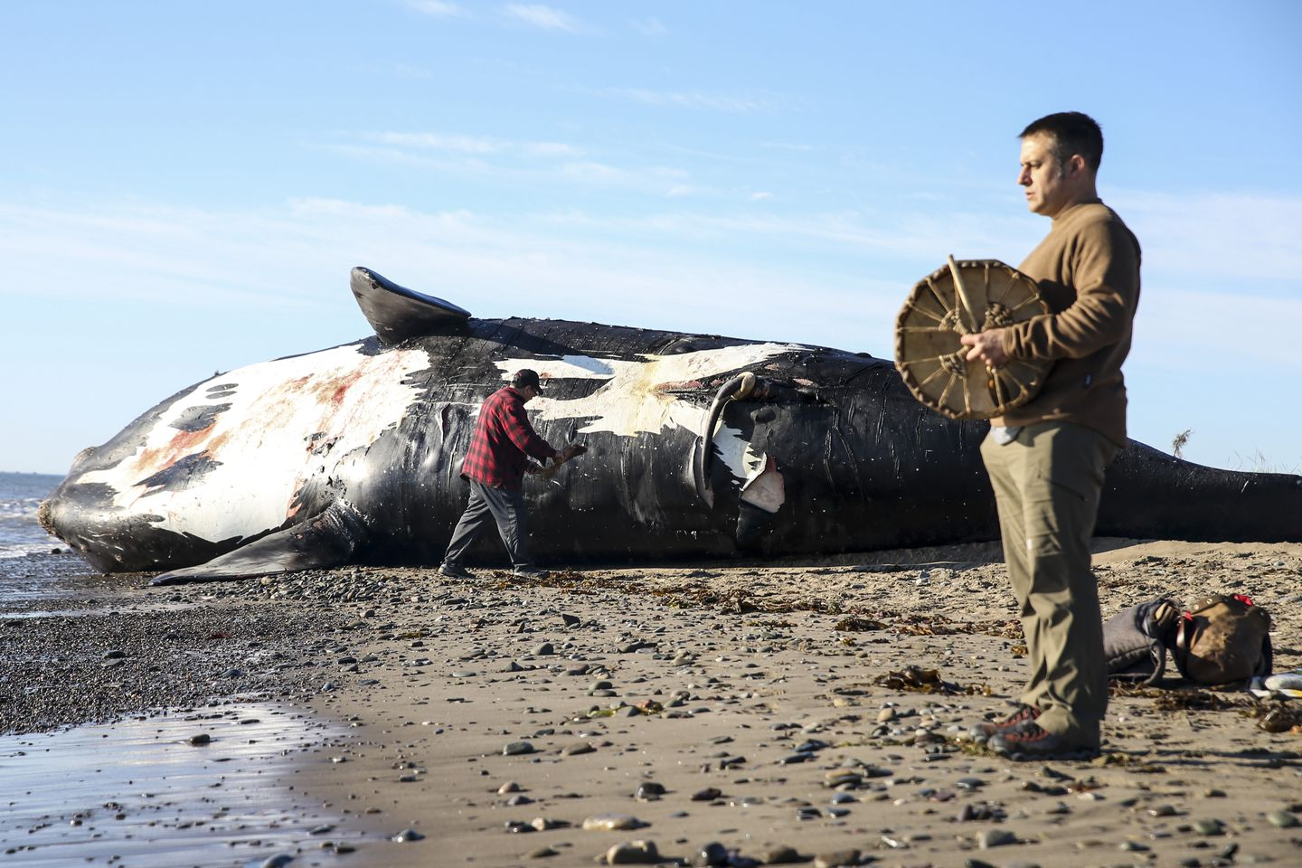 As right whales surge north, one death too many - The Boston Globe