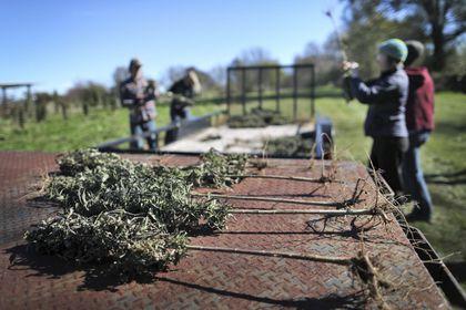 Trendy hemp compound CBD set for big boost from US farm bill