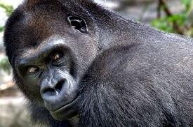 Little Joe is a big draw for Franklin Park Zoo.
