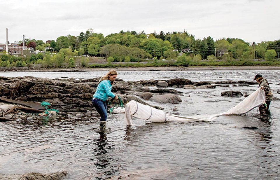 Jessica Card (left) tends her net in the Penobscot River, with help from Julie Keene. Baby eels changed the women's financial fortunes after the price skyrocketed several years ago.