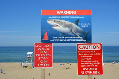 What to do if you spot a shark: Answers to 6 safety