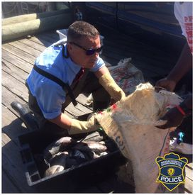Police discover a group of fishers reeled in fish hundreds of pounds over the legal limit.