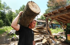 LaCasse carries a piece of an ash tree he has cut down over to the sawmill to be further cut.