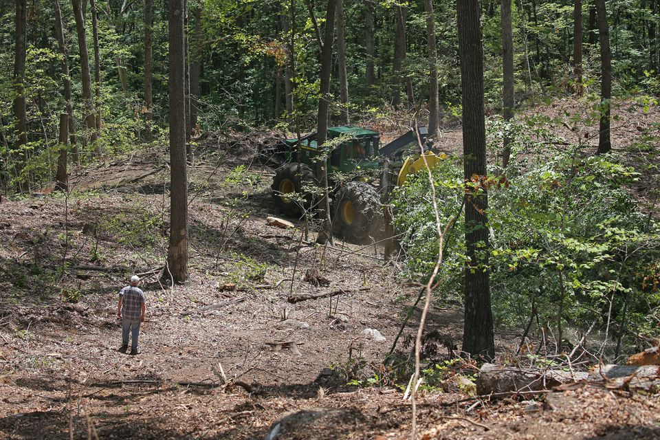 A new report has found that suburban sprawl and other development consumes about 65 acres a day of woodlands from Connecticut to Maine.