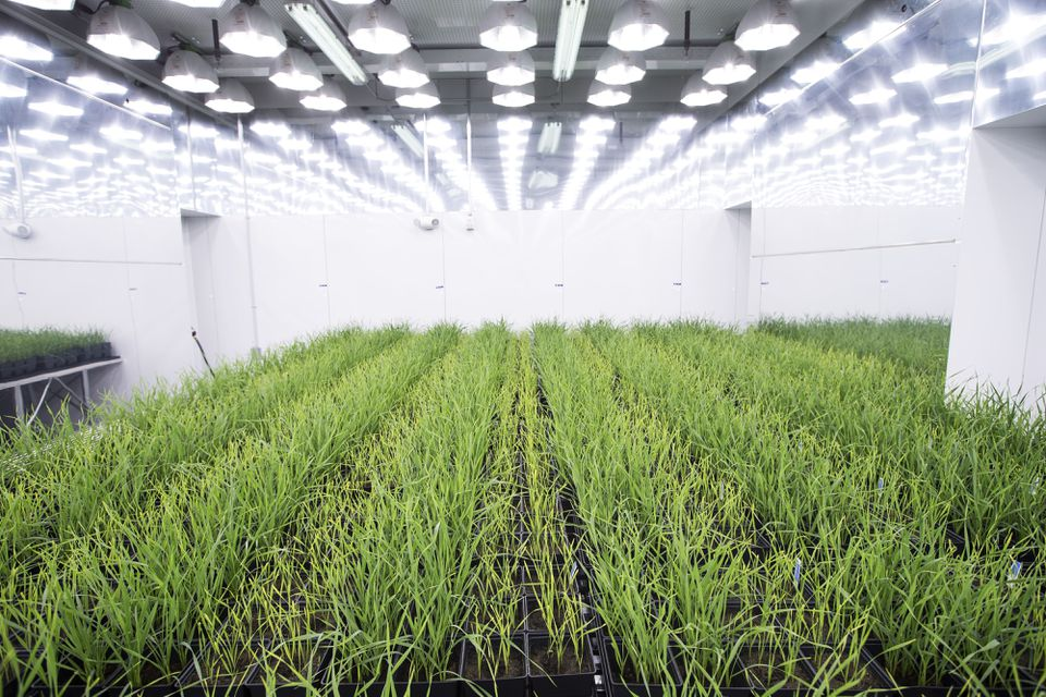 Indigo Agriculture is working to create hardier crops.