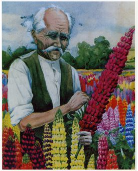 A painting of George Russell, the horticulturist who single-handedly changed the lupin.