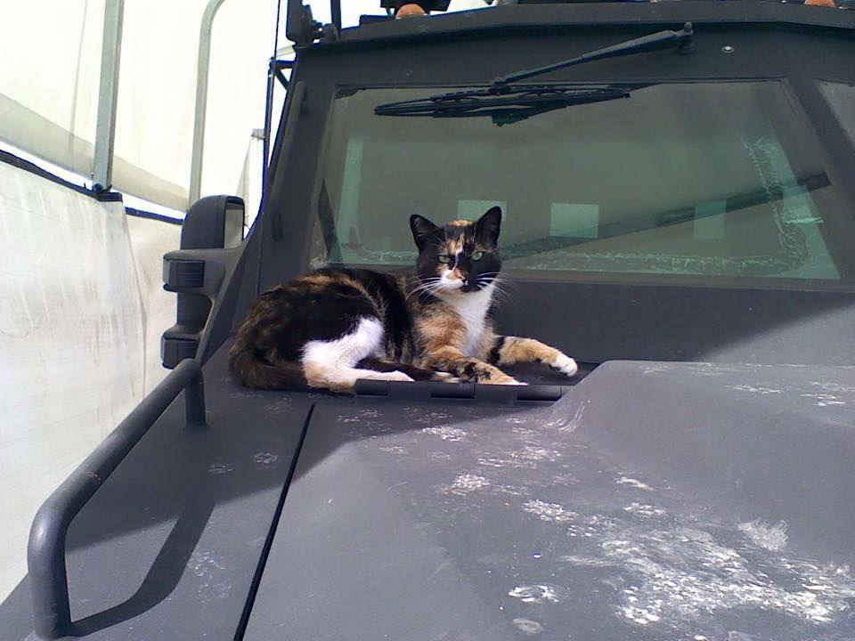 SWAT Cat lounges atop a Bearcat, an armored vehicle used by the SWAT team.