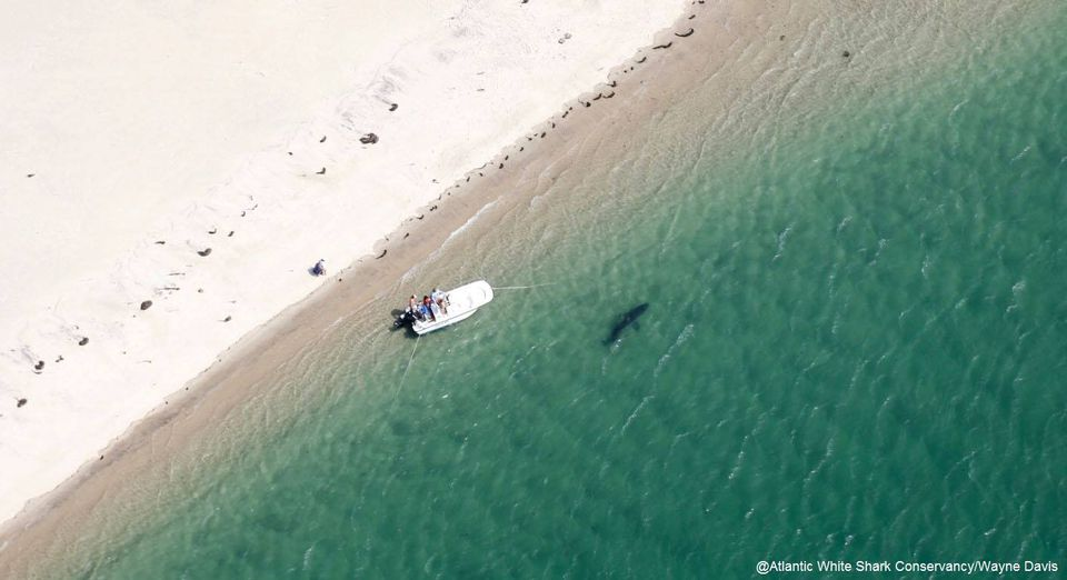 Researchers spotted the shark close to the family's boat.