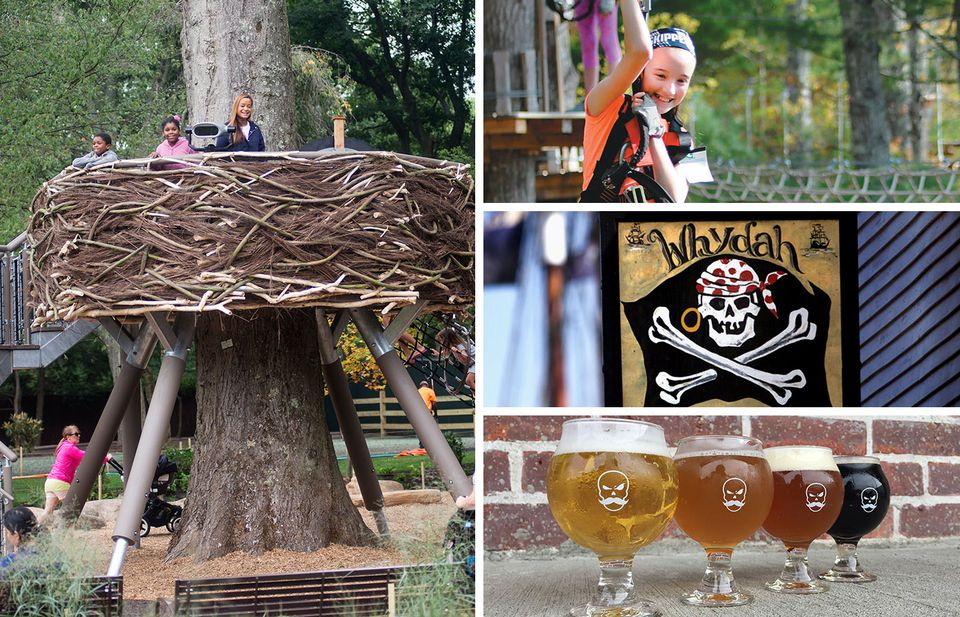 Clockwise from left: The eagle's nest at the new children's zoo at Franklin Park; ziplining at TreeTop Adventures; the expanded Whydah Museum; and samples from Bone Up Brewing Co.