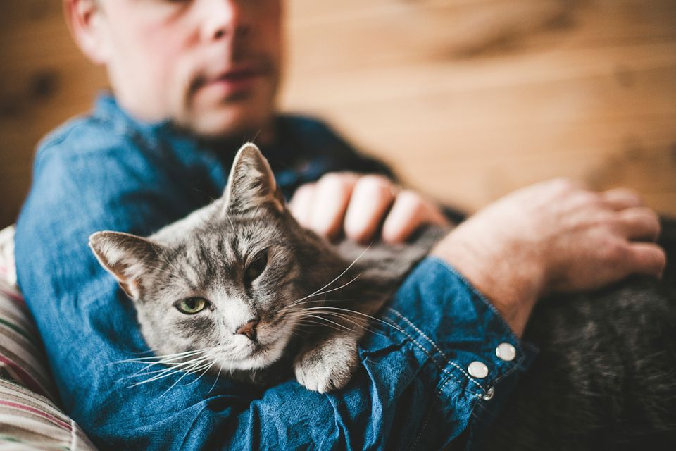 A study found cat owners were more likely to survive a heart attack than those who never owned cats.