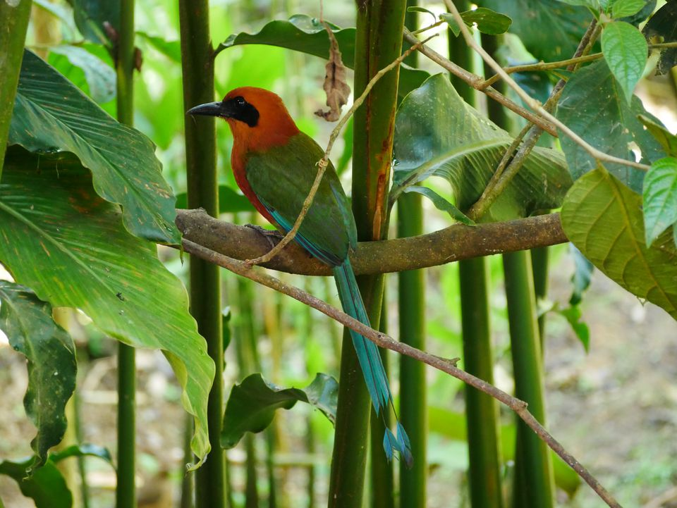 A Rufous Motmot welcomed the family.