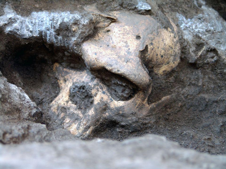 The Dmanisi early Homo skull.