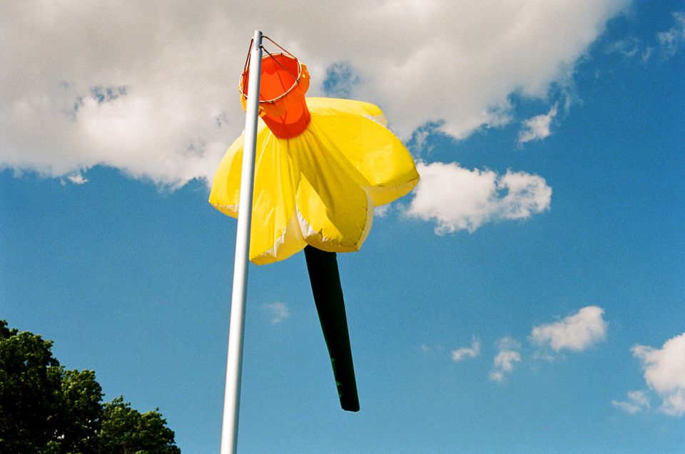 """One of Daniele Frazier's enormous daffodils from """"The Giant Flowers in Highland Park"""" installation in New York."""