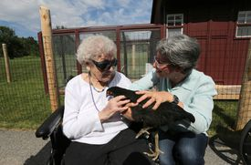 """Resident Thelma Mollot, age 101, was introduced to """"Beulah,"""" by """"Chicken Captain"""" Terry Golson (right)."""