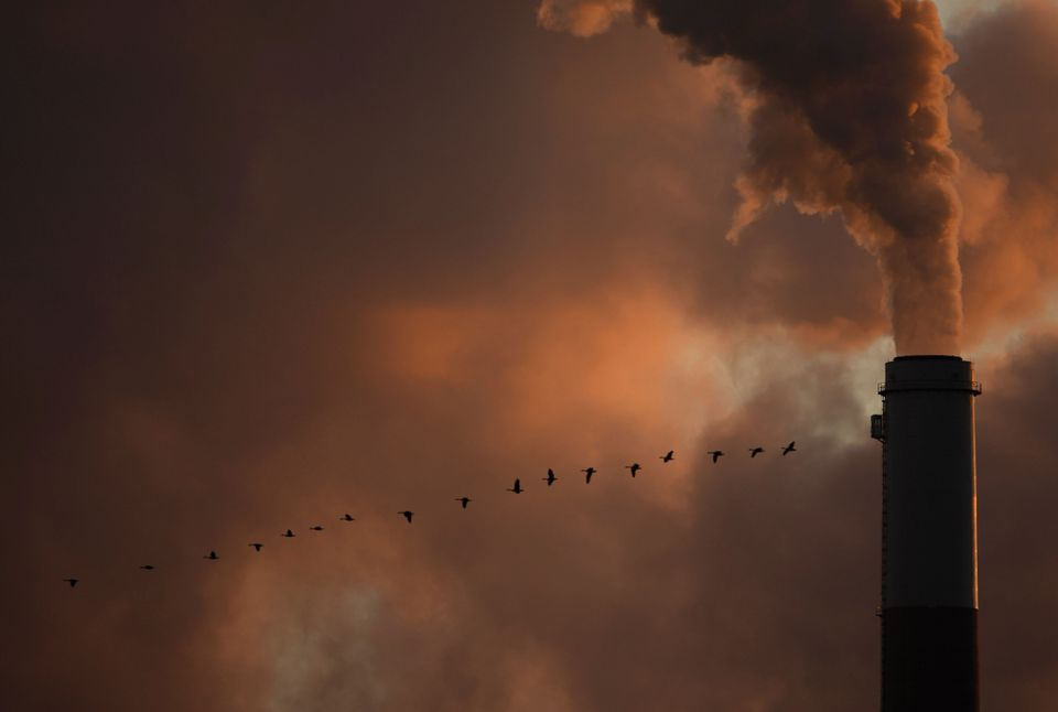 A flock of geese flew past a smokestack at a coal power plant.