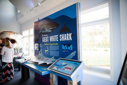 Shark Center' in Chatham opens ahead of shark season - The Boston Globe