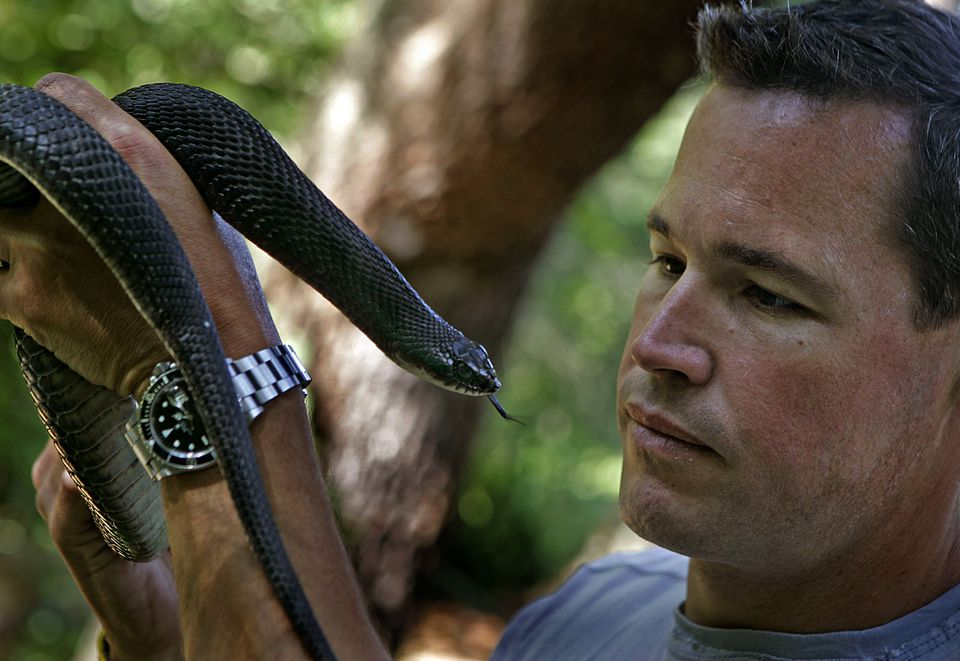 Jeff Corwin holds a hognose snake while walking in the woods in Norwell.