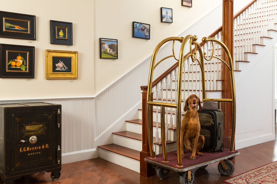 Dogs are treated like royalty at Lord Camden Inn in Camden, Maine.
