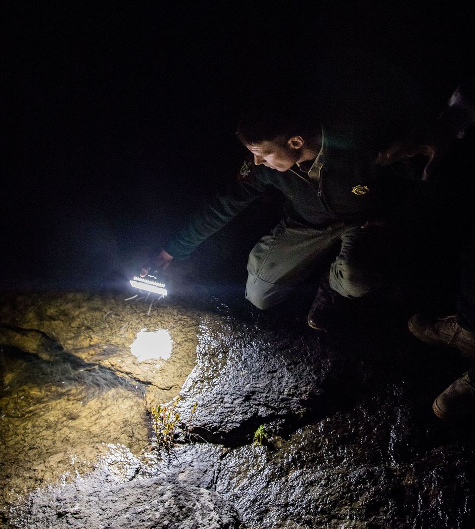 Marine patrol officer Rustin Ames shines his flashlight into a pool of eels at Frankfort Dam.