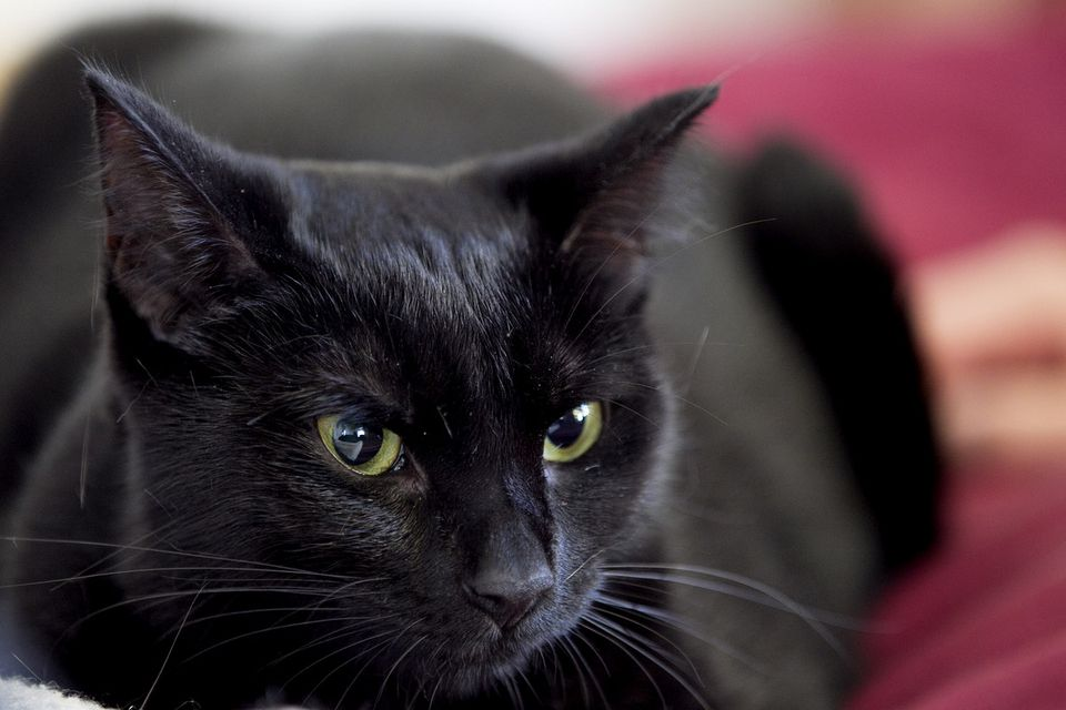 Cinder was a stray who languished in a shelter before going to a foster home, where she is now waiting to be adopted.