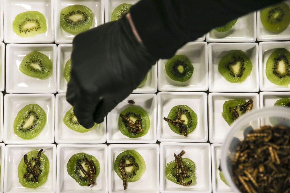 Slices of kiwi are topped with mealworms during the Edible Insects Festival.