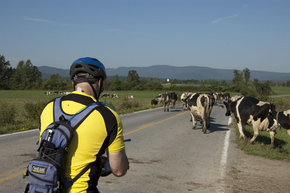 The author ceded the right of way on a state road to a herd of Vermont natives.